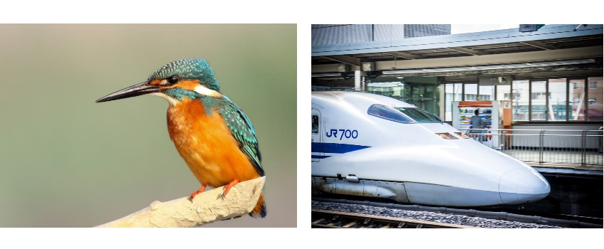 The beak of the kingfisher inspired the design of Japan's sharp-nosed bullet trains