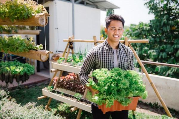 Man holding a bucket full of lettuce in front of his urban farm. Photo: ferli © 123rf.com