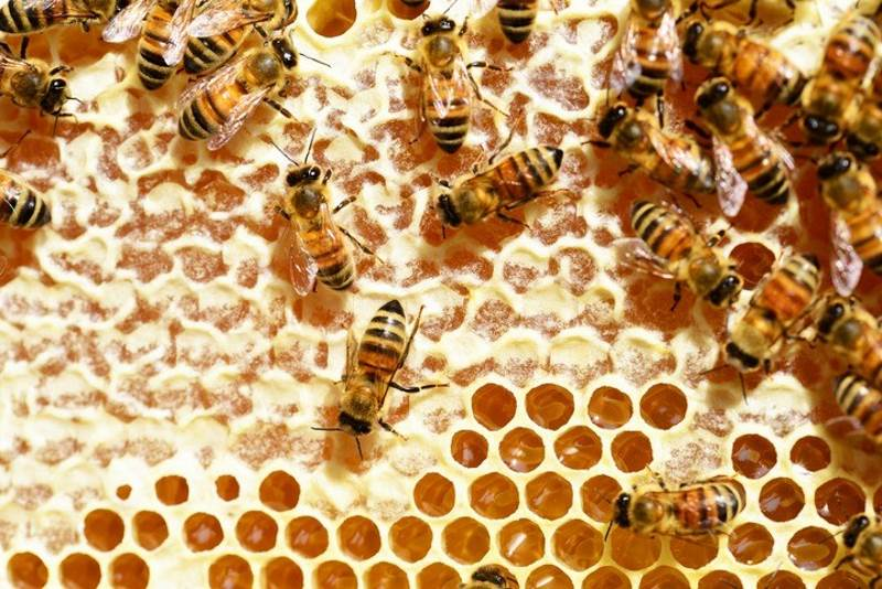 A beehive is an example of a complex system
